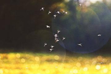 Entzündete Mückenstiche